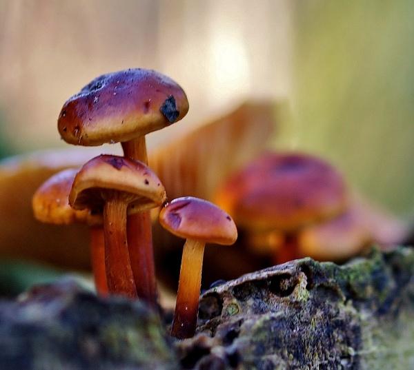 Winter image fungi 2 by georgiepoolie