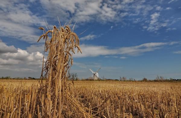 Missed Harvest by carper123