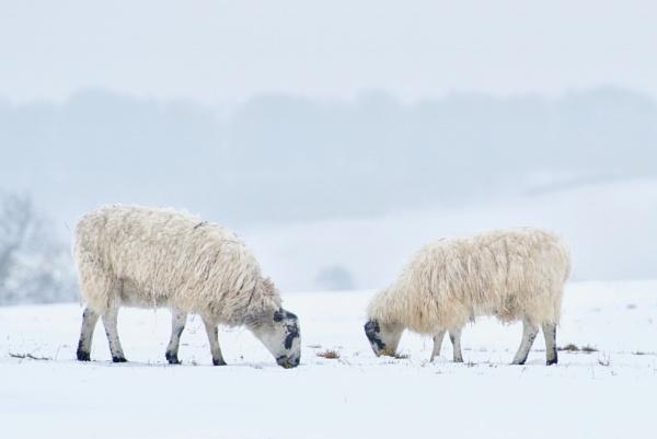 White stuff by Dorset6476