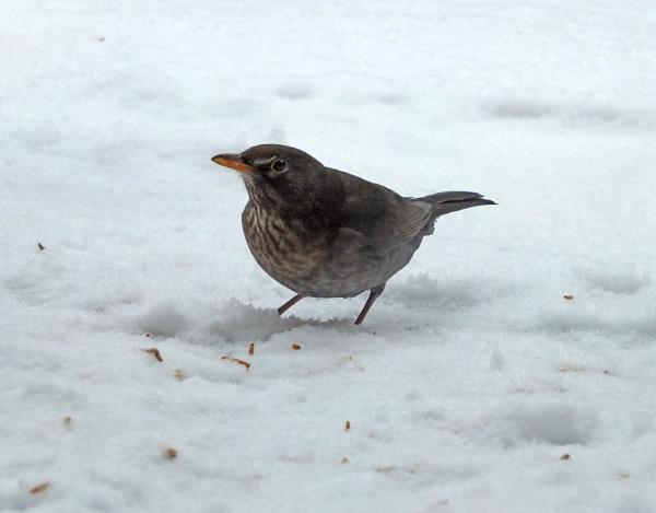 "\"" Let it snow,, let it snow \"" by Mollycat"