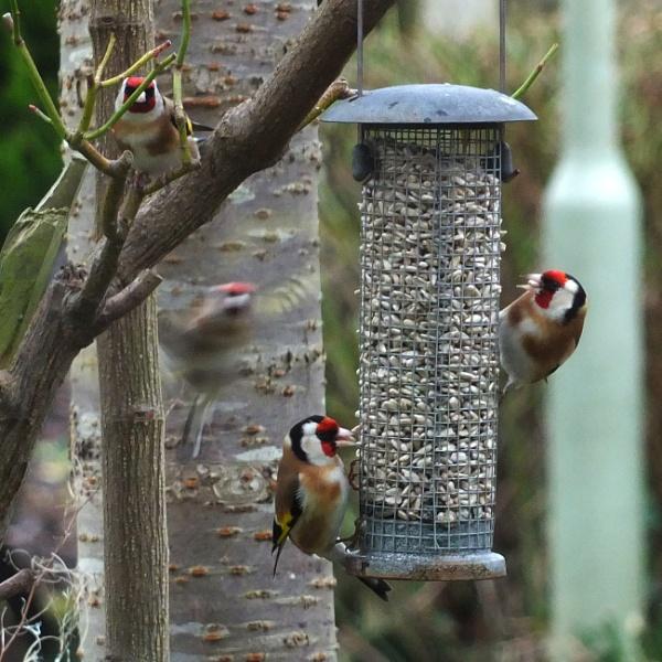 Watch the birdie.. by Mollycat