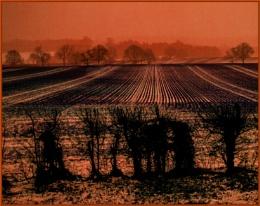 neighbouring field...
