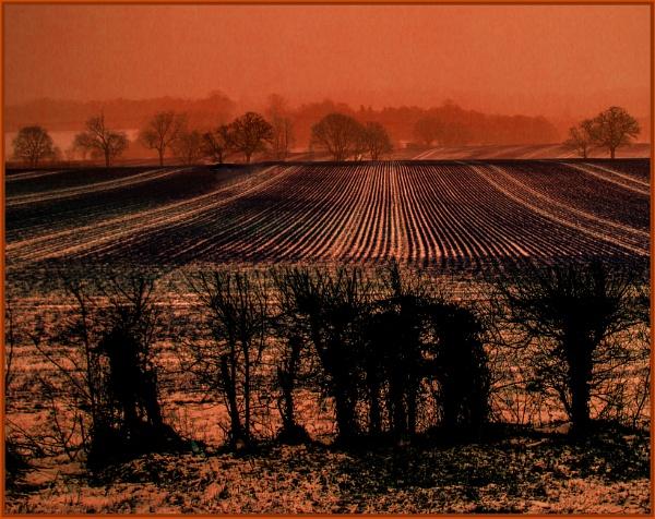 neighbouring field... by estonian