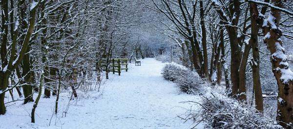 A winters Walk. by Alex64
