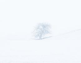 Hokkaido Tree