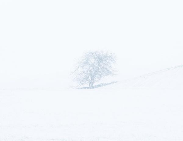 Hokkaido Tree by Skyerocket