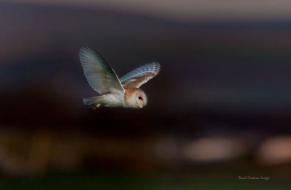 Night Owl by DavidCookson