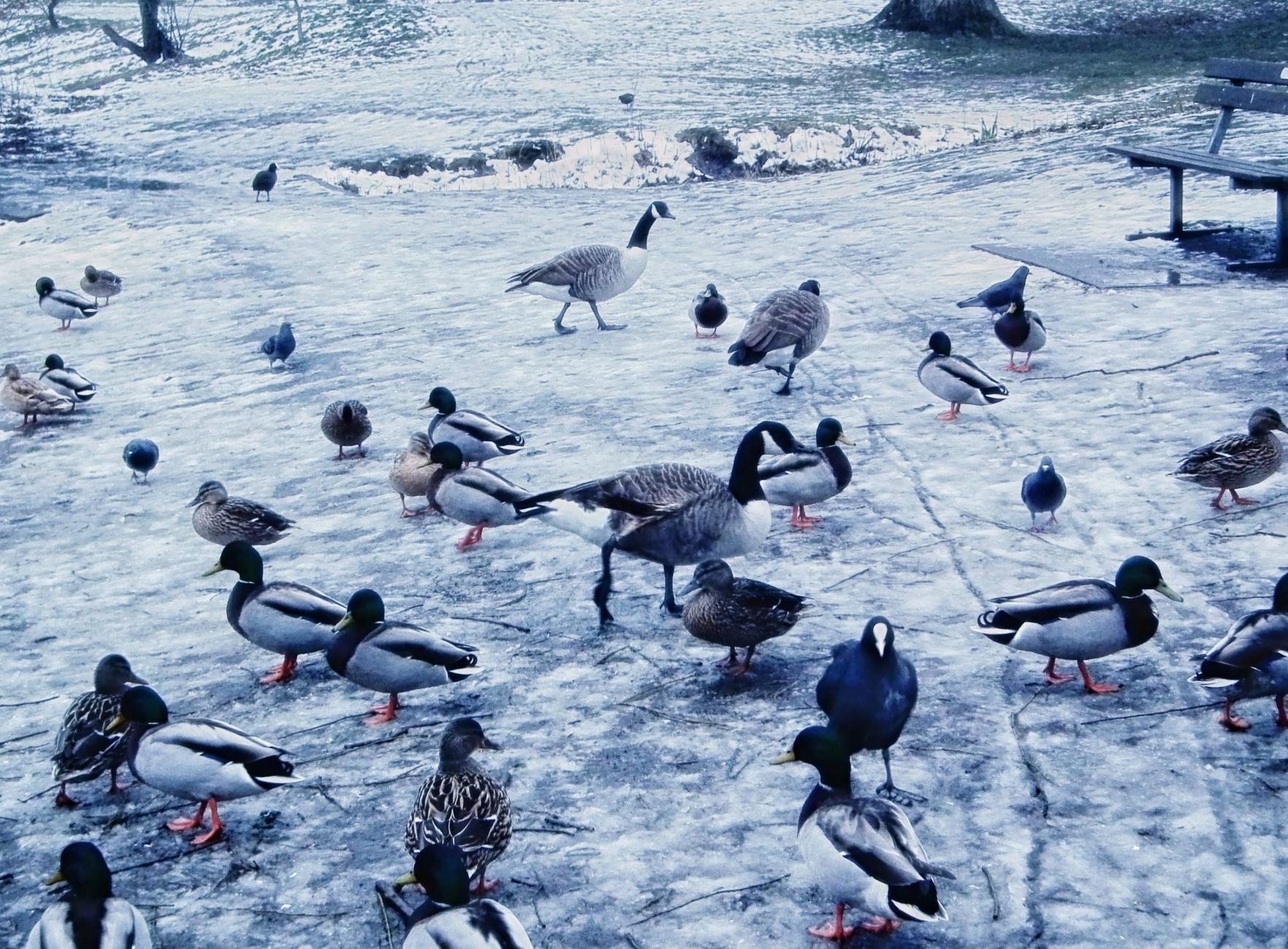 Skating rink for birds