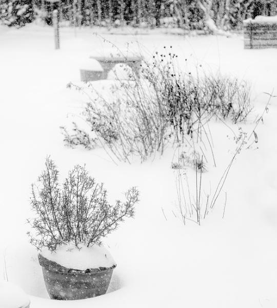 winter garden by 66