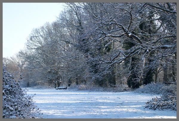 A Snowy Treescape