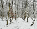 Beechwood Snow by MalcolmM