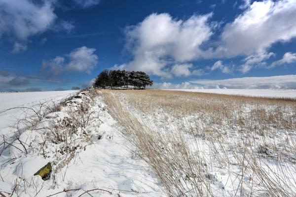 farmland by steviehutch