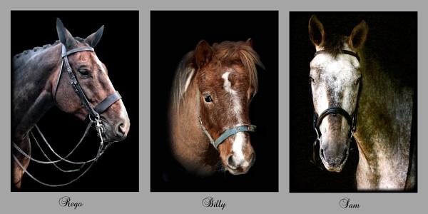 Equine v2 by Stuart463