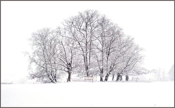 Priory Copse by tonyheps