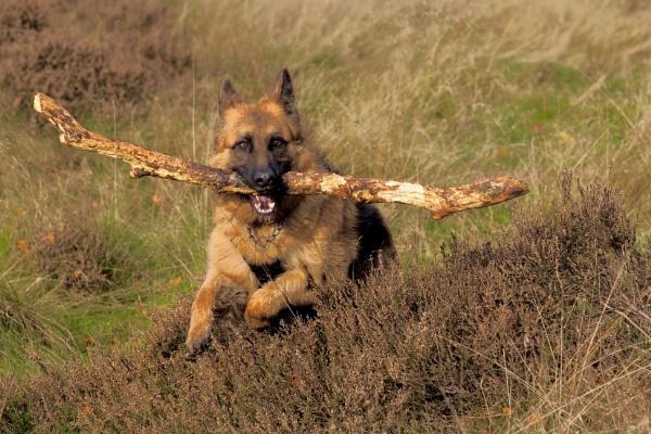 Germans love Stick! by altosaxman