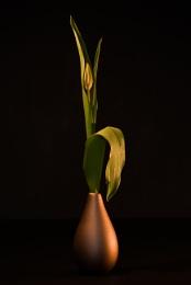 Tulip & vase.
