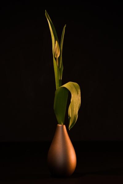 Tulip & vase. by optik