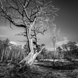 Lightning Tree B&W