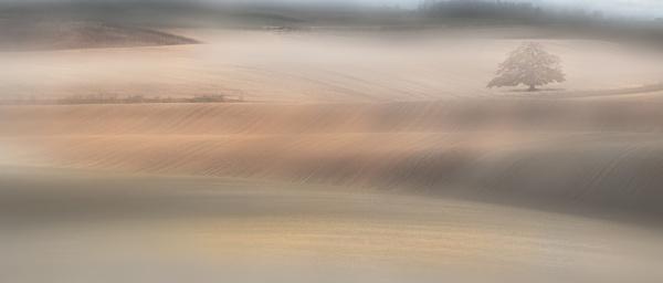 Misty Fields by nclark