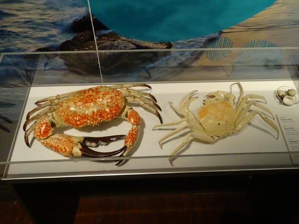 Crabs, Albany, Australia. by YoungGrandad