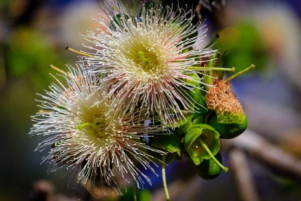 Wild Flowers by bobbyl