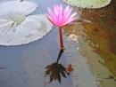 Buds & Flowers by RajaSidambaram