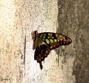 Hello Beautiful - Butterfly by debu