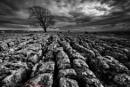 Tree in Monochrome by geffers7