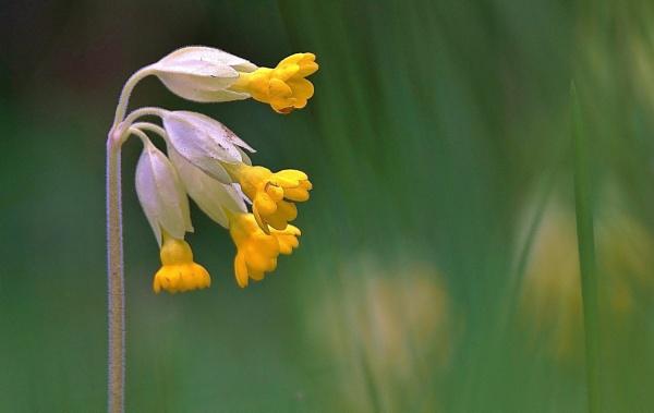 Wild flower by georgiepoolie