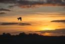 Sunset by carper123