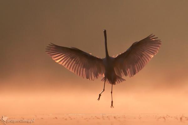 Phoenix by zimen