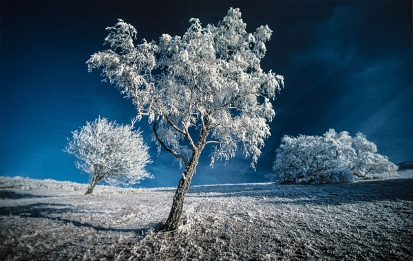 Touch of Frost by Tonyd3