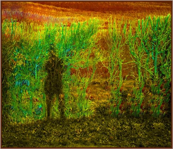 wicker man shadow by estonian