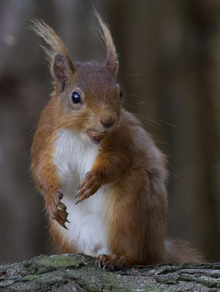 Last One................. Nut not squirrel by danbrann