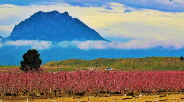 Cieza Peach Blossom by Pejadee