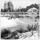 Merryfield Pond by EddieAC