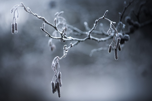 ...winter branch by KristinaZvinakeviciute