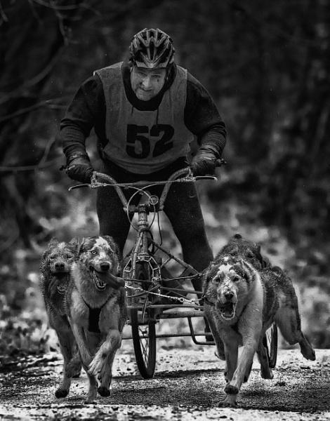 Husky racing by tomskibabes