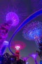 Supertrees of Singapore by edrhodes