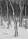 Windblown Snow by MalcolmM