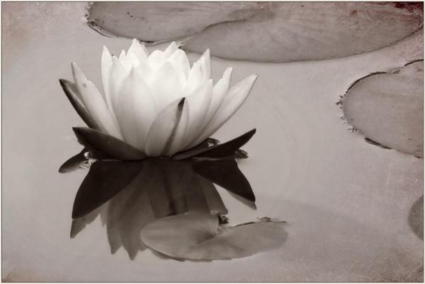 Peaceful by Joline