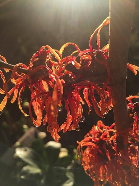 Wierd plant