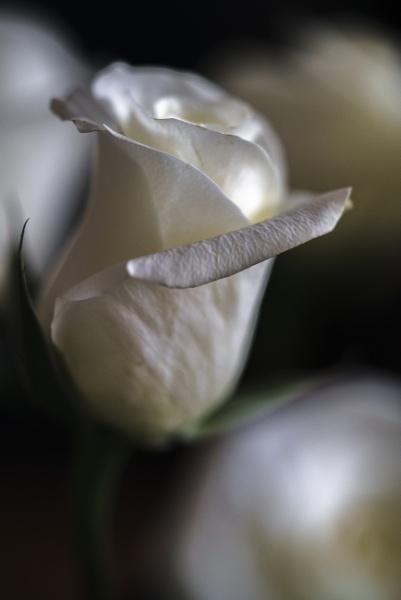 White by nikonf5