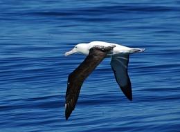 Albatros taken on our World Round Trip in New Zealand
