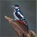 Woodpecker by mjparmy