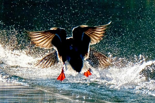 Flyaway Love! by cheddar-caveman