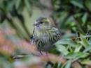 """a bird in the bush"" by norton"
