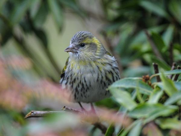 "\""a bird in the bush\"" by norton"