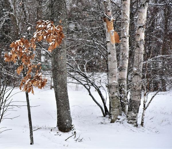 Snowy mix by djh698