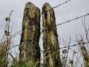 Fence Posts by carper123